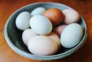 brown, blue, and regular eggs