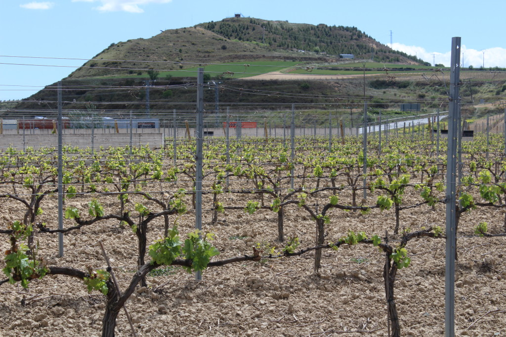 wine vines, La Rioja